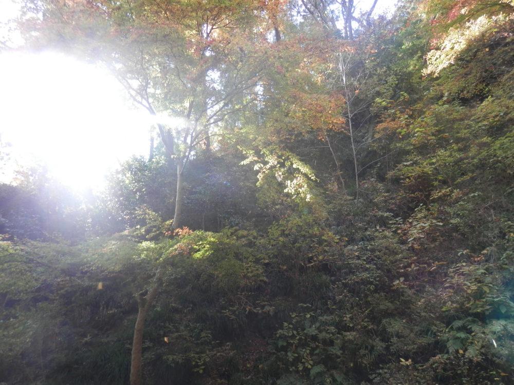 秩父華厳の滝の紅葉