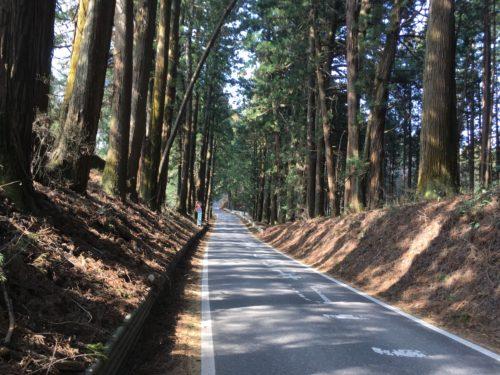 国道121号の杉並木