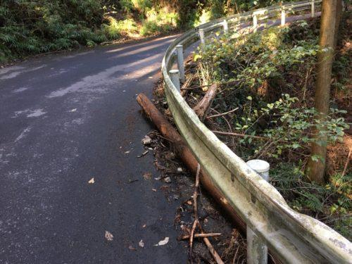 天目指峠、道中に落ちている木