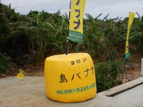 与論島の島バナナ