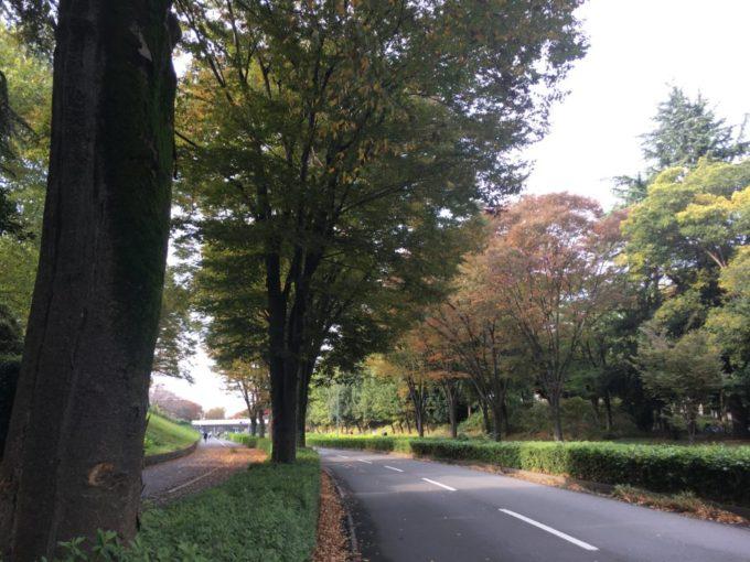 埼玉県所沢市をサイクリング