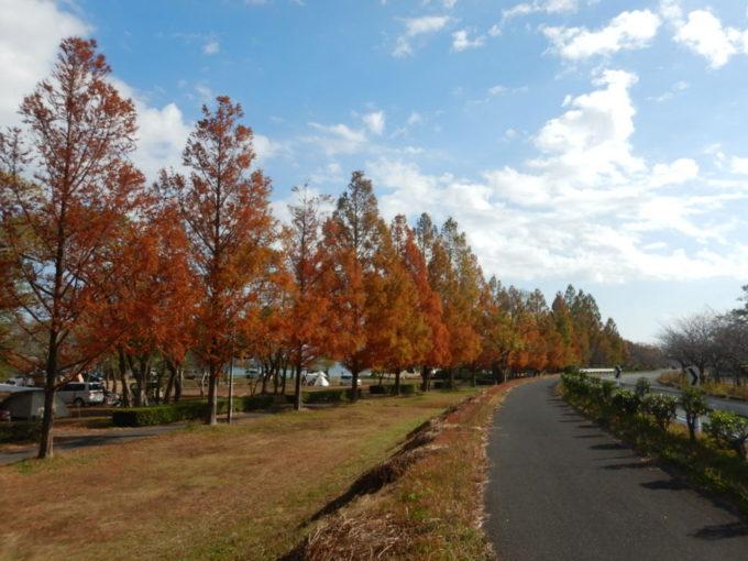 六ツ矢崎浜オートキャンプ場の並木道