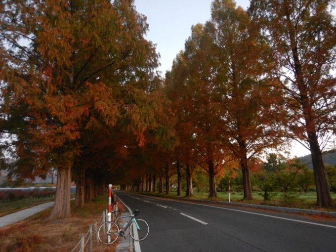 高島市マキノ町のメタセコイア並木道